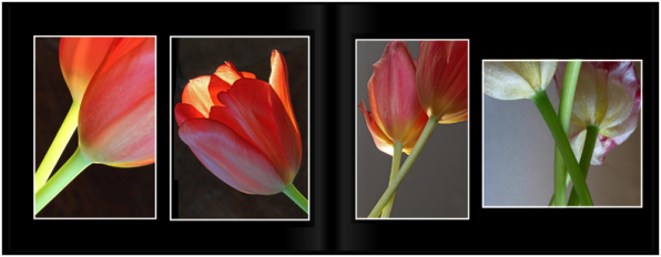 TulipsPg_2021a