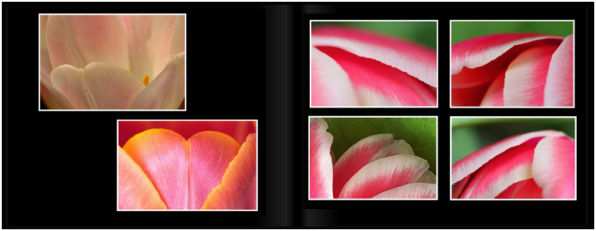 TulipsPg_3031a