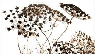 "CAPA March 2021: Monochrome, ""Winter garden"""