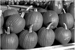 Pumpkins Wisconsin