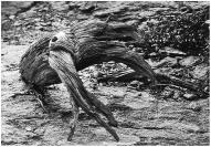 Stump on the beach