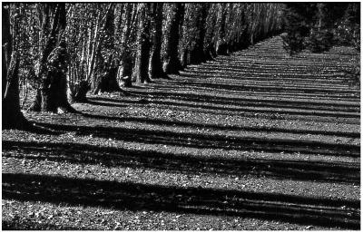 Shadows New Zealand