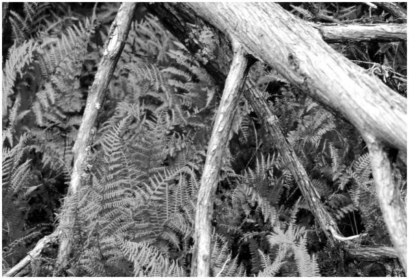 Ferns Ontario