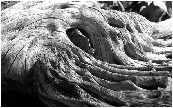 Old log