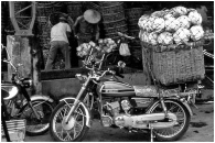 Cabbage transport Taiwan