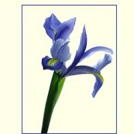 Iris_1341b3COS2sm