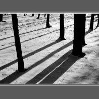 TreeShad_pb9sm
