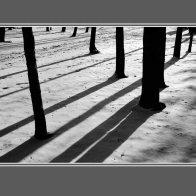 TreeShad_prb3sm