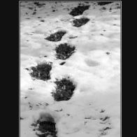 Footprints_13794c